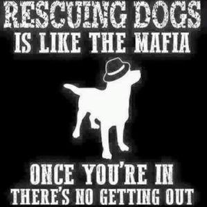 Meet your Animal Rescue Posher, Tammy